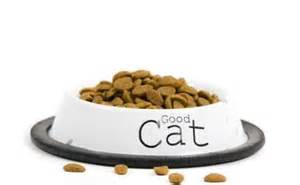 Top 5 Tips for Saving Money on Cat Food