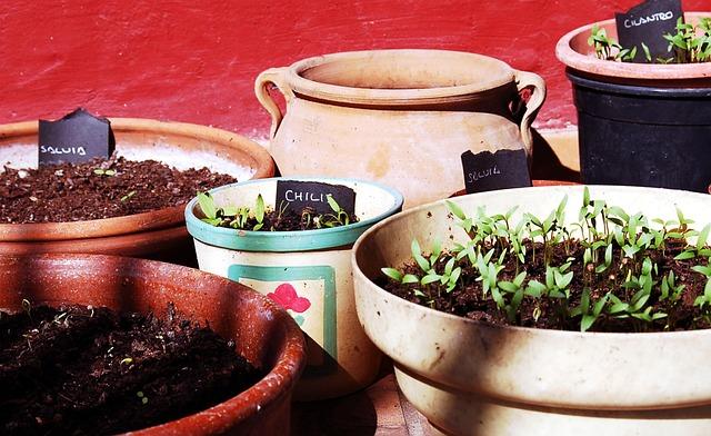 aromatic-plants-130414_640