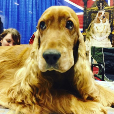 Why Your Family Will Love a Dog Show
