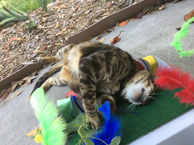 DIY Catnip Garden