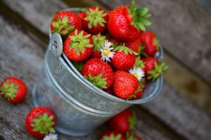 bucket of fresh picked strawberries