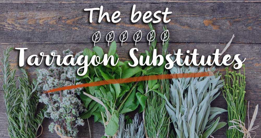 8 Great Options for a Tarragon Substitute